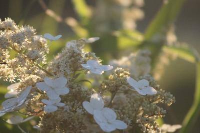 朝日に輝く花