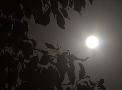 木に隠れた満月