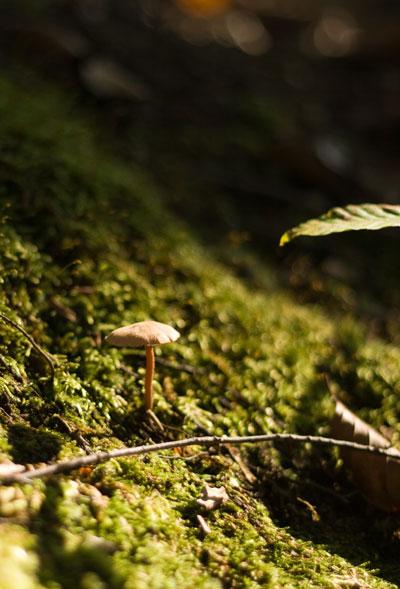 苔の中のキノコ