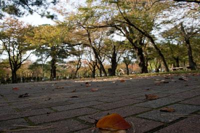 秋の高田公園