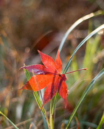 朝日に染まる落ち葉