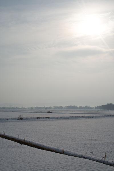 雪に微睡む田