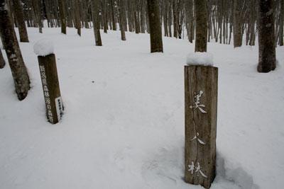 雪の美人林