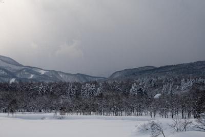 静かな冬の森