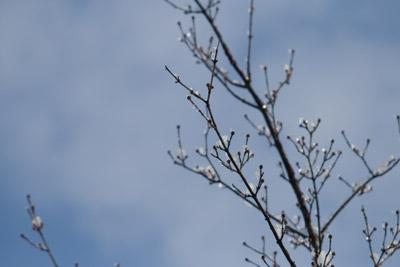 枝の先の玉のような煌めき