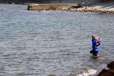 海草採りをしていたおばさん
