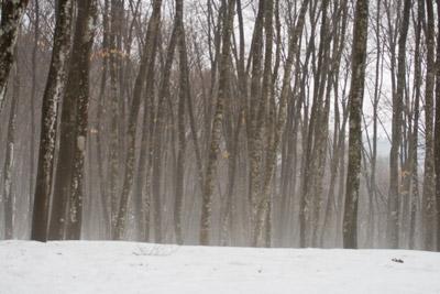 モヤに包まれた美人林