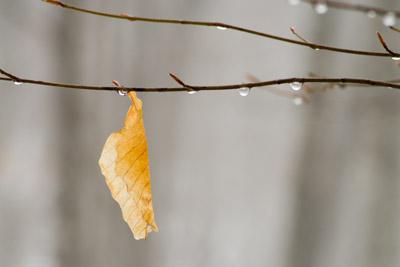 靄に漂う枯れ葉