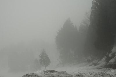 霧の十日町市松代蒲生の棚田