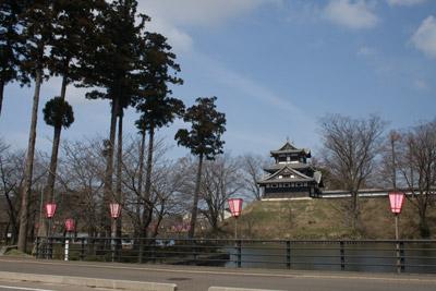 高田公園のさくら