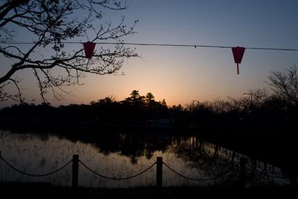高田公園の桜、早朝撮影