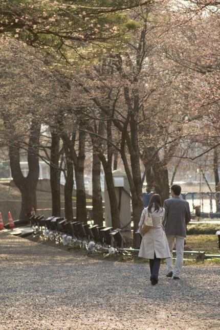 桜咲く前からデートスポット