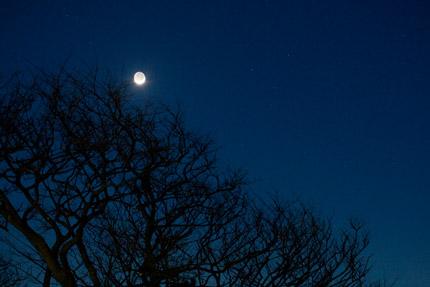 地球照(ちきゅうしょう、earthshine)も見られました
