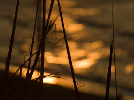 夕日が海を赤く照らしています