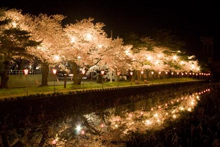 南西のお堀の夜桜