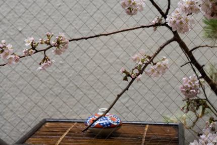 窓の外は花