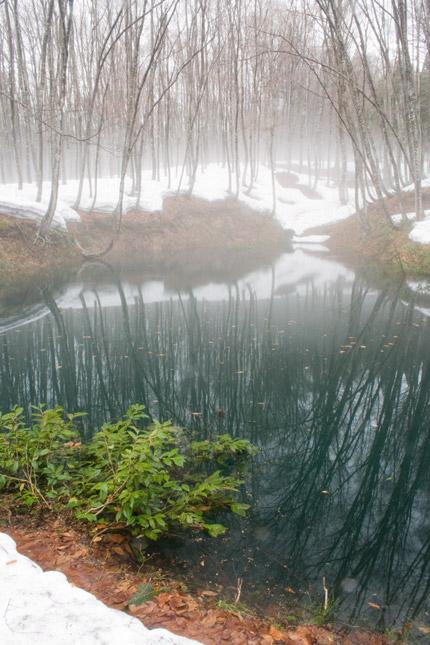 幻想的な小池