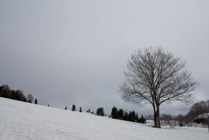 大厳寺高原の木