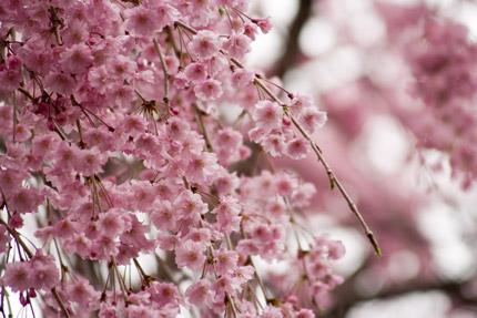 小さなかわいい花がたくさん枝についています