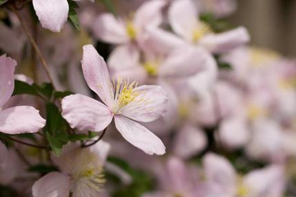 名前の分からぬ花