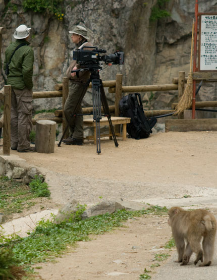 ようやくお猿さんの登場です