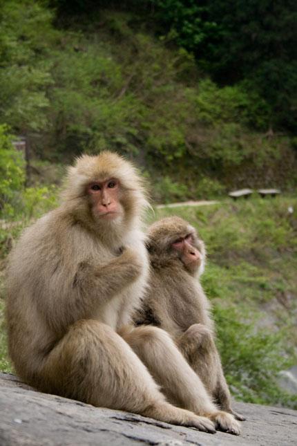 仲間通しほのぼの過ごすお猿さん