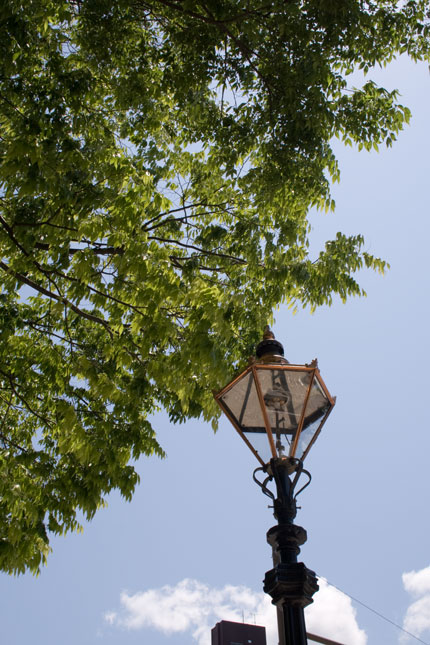 新緑の木々や、街灯