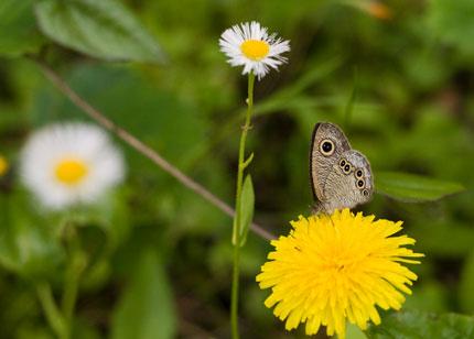 蝶には、花が似合います