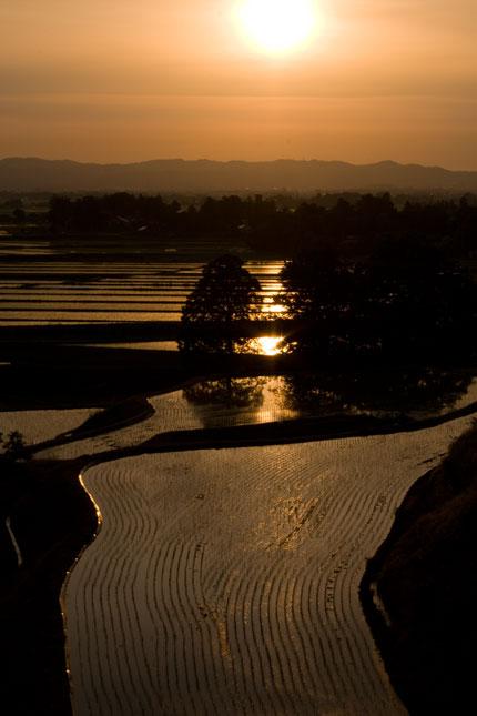 田に夕日が映り込みました