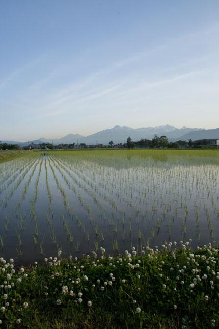 田に映る妙高山