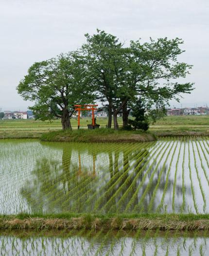田の水に浮かぶ神社