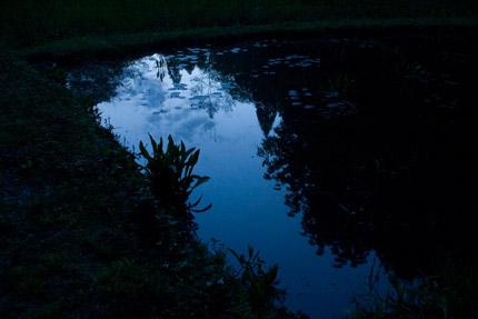 蛍の飛び交うはずの池