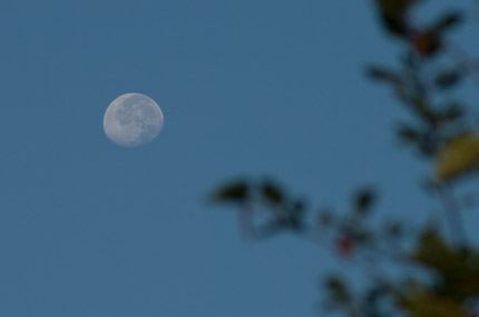 東の空に月