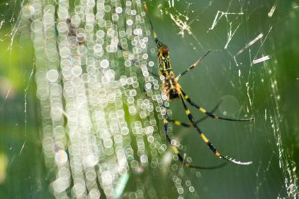 蜘蛛も生きて行く為に必死
