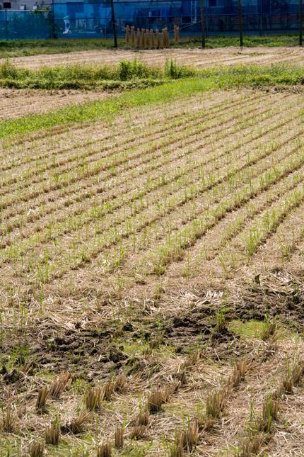 田も稲が刈り取られ