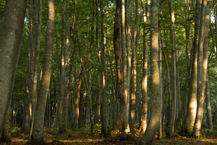 美人林はいつもの笑顔で