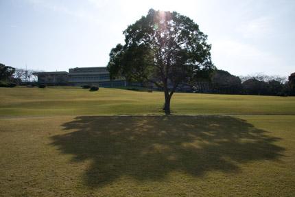 大きな木が印象的