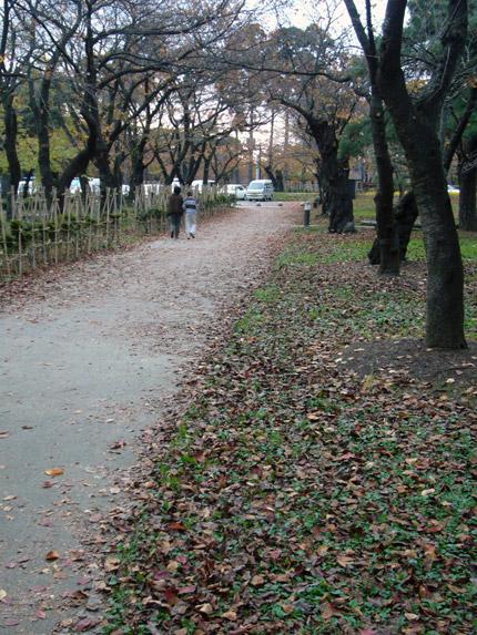 秋の終わりの高田公園の道
