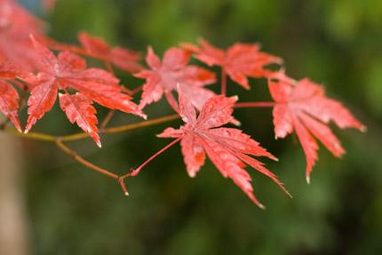 緑に浮かぶ紅葉