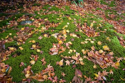 緑の苔の上に落ちた紅葉