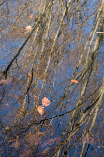 枯れ葉も幻想的
