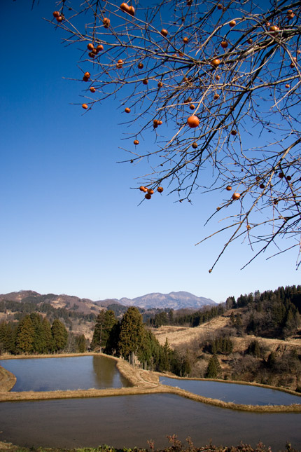 青い空と山をバックに渋柿