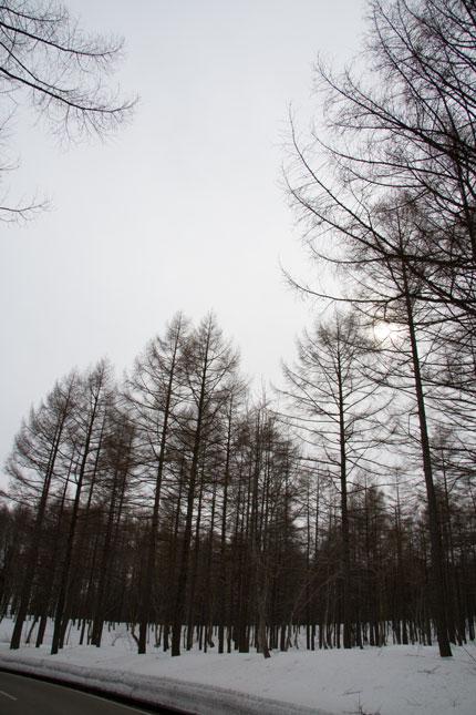 新潟県妙高山近くの森の風景