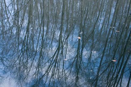 池に反射する美人林