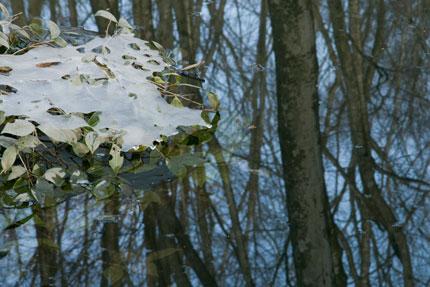 木々は凍っていました