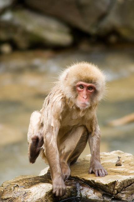楽しいお猿さん