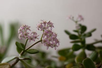 小さい木に咲いたピンクの花