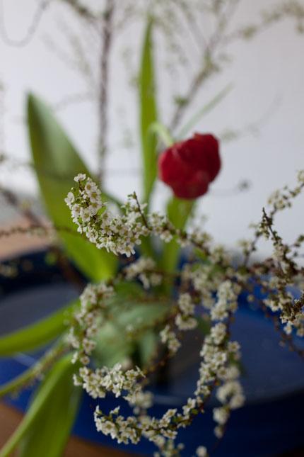 白い花と赤いチューリップ