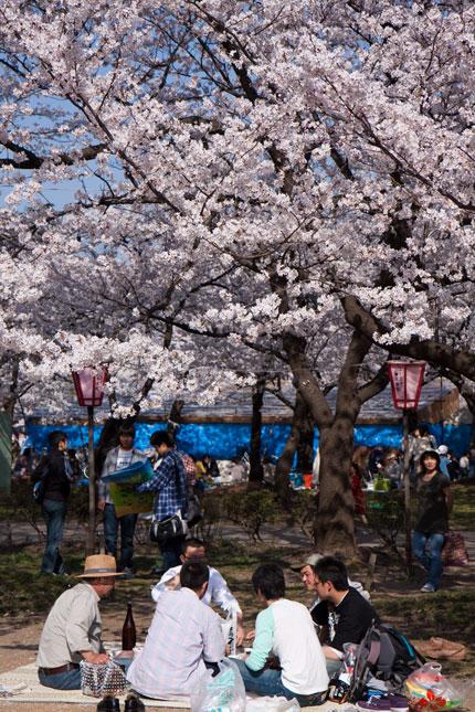 やっぱり花見は、桜の木の下