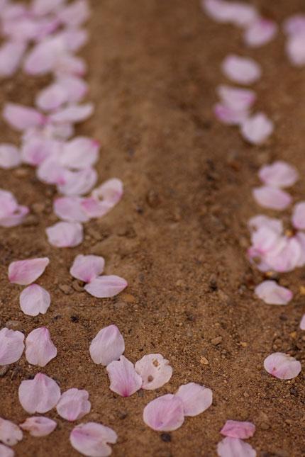 道にサクラの花びらが